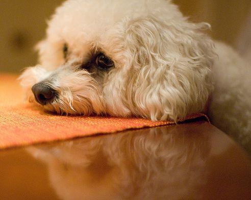 kutyaallergi2